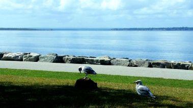 coltstateparkseagulls