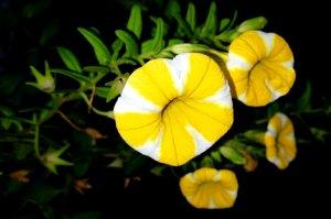 yellowandwhite