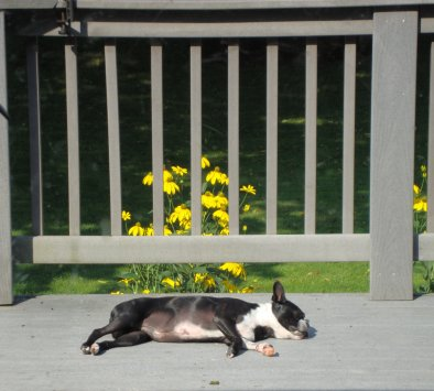 dogdaysofsummerlarge