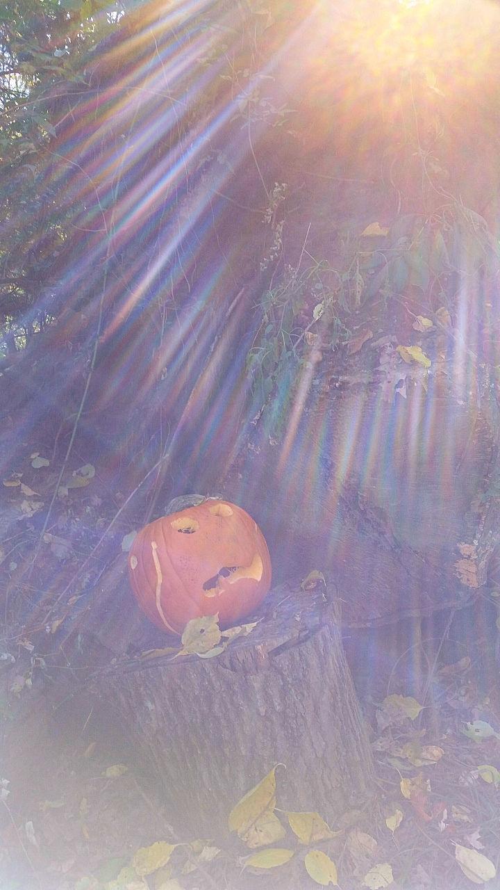 A Pumpkin Story www.jessicamcollette.com